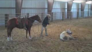 Bob's Blog: Tying Down a Steer Alone