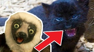 🐒 Zoboomafoo | 2 Hour Compilation |  Full Episode | Cartoons for kids