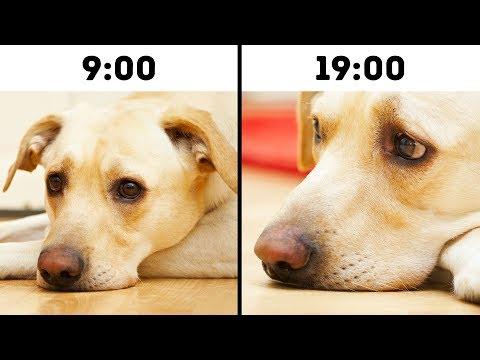 10 Mistakes That Shorten Your Pet s Life
