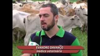 23/07/2014 - Agricultura, Fazenda Providencia, Biotecnologia - Ourofino em Campo