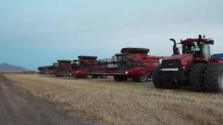 Demaray Harvesting Arizona wheat 2016