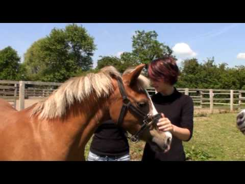 Nantwich Show Girls  -  2 girls 1 horse - hot day