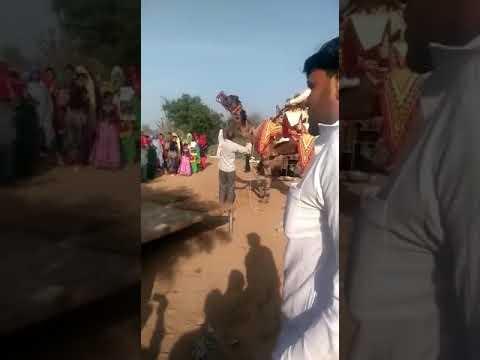 Xxx Mp4 Very Beautiful Dance By A Camel 3gp Sex
