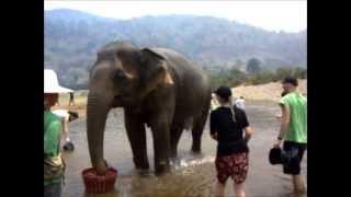 Elephant Nature Park - Mae Bua Khum
