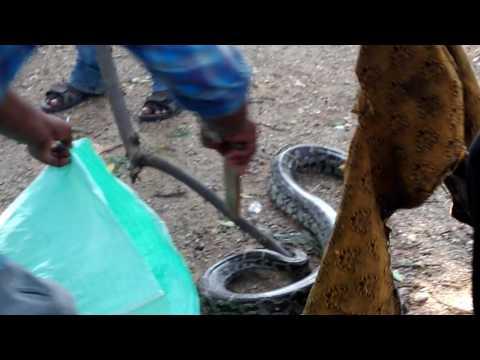 Xxx Mp4 Snake Video Village Annaram Karimnagar 3gp Sex