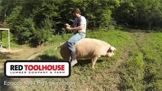 Episode 4 - Pig Insemination - Artificial insemination on pastured hogs