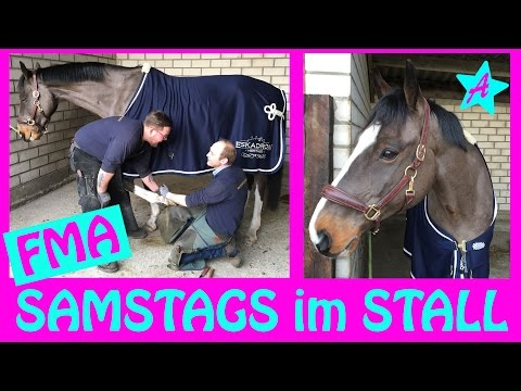 FMA Samstag Morgen im STALL I Hufschmied & Longe I Stallalltag VLOG