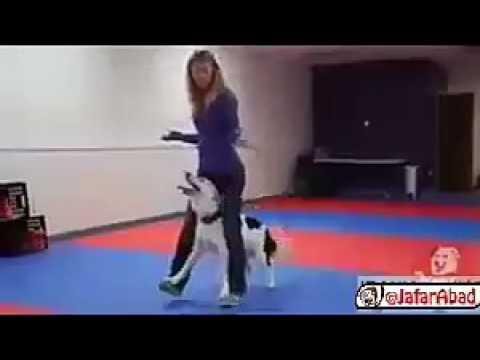 🎥 رقص بی نظیر یک دختر با سگش 😍😍