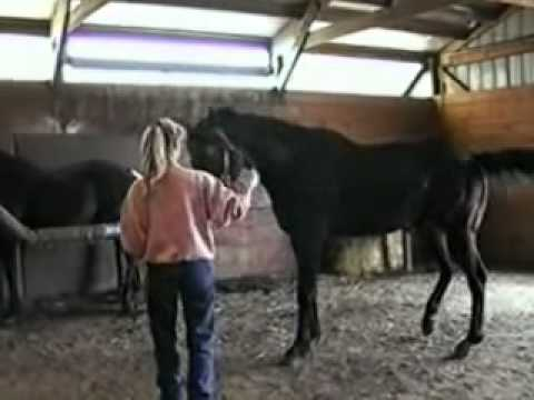Thoroughbred Breeding Shed