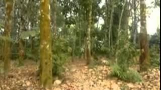 Padanglawas Movie - Pendekar Paitte Jolo