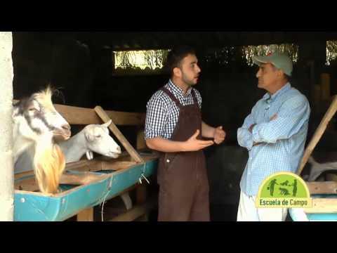 Escuela de campo Sistemas caprinos de producción de leche 23 de julio