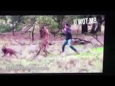 Xxx Mp4 Man Punches Kangaroo To Save His Dog With WWE Commentary 3gp Sex