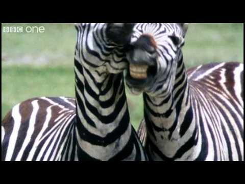 Funny Talking Animals Walk On The Wild Side Series 2 Episode 1 preview BBC One