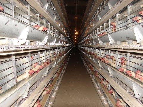 Türkiye nin yumurta fiyatını Afyon Başmakçı belirliyor