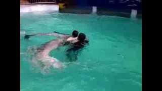 Abang Berenang sama Lumba-lumba