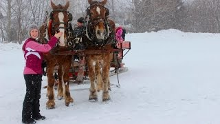 Horse and Sleigh Ride