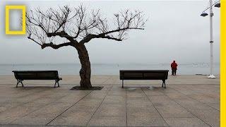The Secret Lives of Trees   Short Film Showcase
