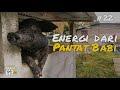 Energi Dari Pantat Babi Ekspedisi Indonesia Biru 22