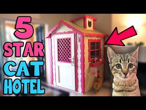 Xxx Mp4 CHIBI GOES TO 5 STAR CAT HOTEL 3gp Sex