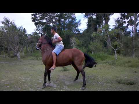 Cavalo Brabo
