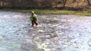 A Beginners Guide To Wet Fly Fishing, Holsinger's Fly Shop
