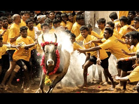 Xxx Mp4 PONGALO PONGAL SONG MUSIC BY RAM 3gp Sex