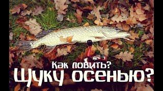Щука осенью. Как ловить?
