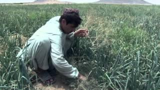 Kandahar Documentary + En Subtitle