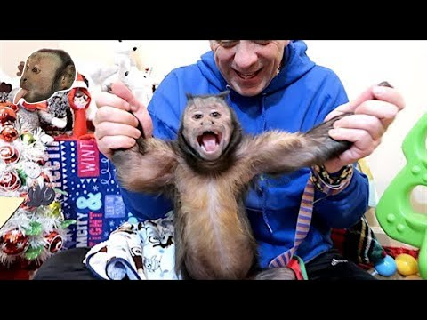 Xxx Mp4 Monkey Christmas Mail 3gp Sex