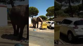 Elefante se escapa circo Mazagón