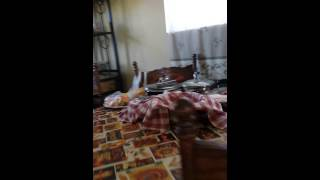 Kass t.v cribs