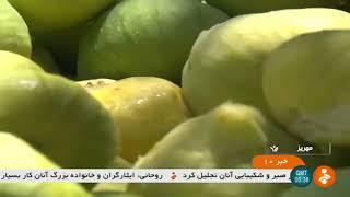 Iran Mehriz county, Fig harvest برداشت انجير شهرستان مهريز ايران
