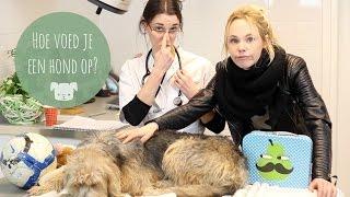 Hoe voed je een hond op? | IKVROUWVANJOU.NL