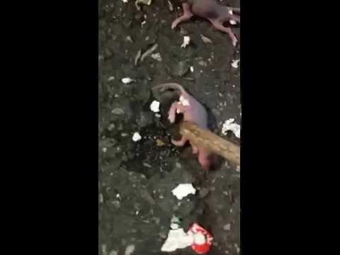 What do i do, I Found 5 Baby Mouses