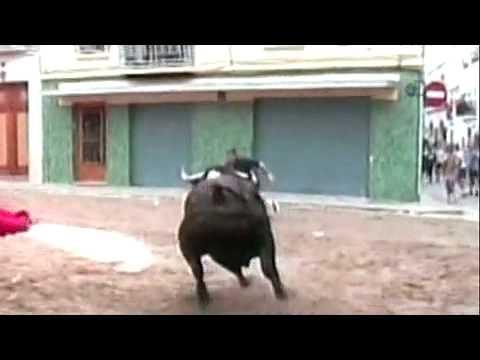 Matador vs Banteng 3.flv Teguh Malang