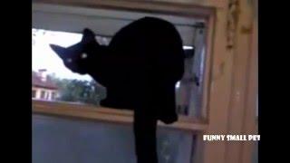 Funny cat video -  cat barks like a dog