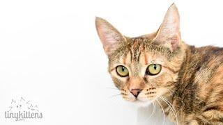 LIVE: Kitten Watch!  TinyKittens.com