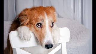 Die Lustigste Schuldige Hunde Kompilation