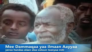 Geerrersaa Seena Oromoo Gabrummaa Diidaaf Wellifamee Dhaggeffadhaa