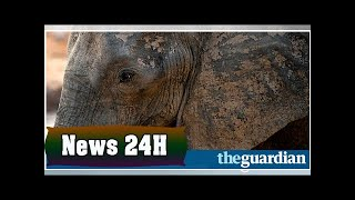 Trump postpones decision on allowing import of elephant parts | News 24H