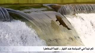 هجرة أسماك السلمون من المحيط الي النهر لوضع البيض