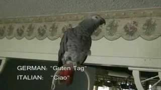 parrot speakes 16 languages!!!