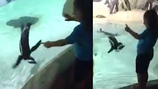 Penguin Plays With 5-Year-Old Girl at New Jersey Aquarium