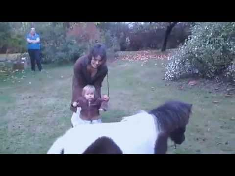 One Year Old Baby Running and Playing w Miniature Horse! ,xnx mony
