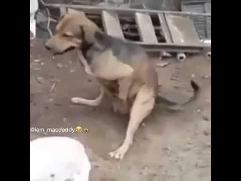 the dog porn