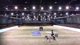 Dubai International Arabian Horse Championships 2014