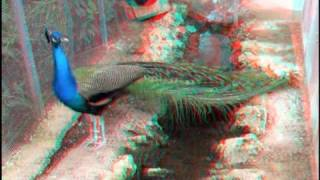 3D - Anaglyph - Utopia Orchid Park - Israel (red cyan glasses needed)