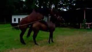 metele caballo