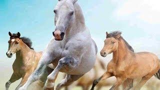 Significado de soñar con caballos o un caballo