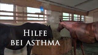 Pferde inhalieren gegen Asthma, COB und Dämpfigkeit eine Meeresbrise...